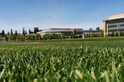 school turf field