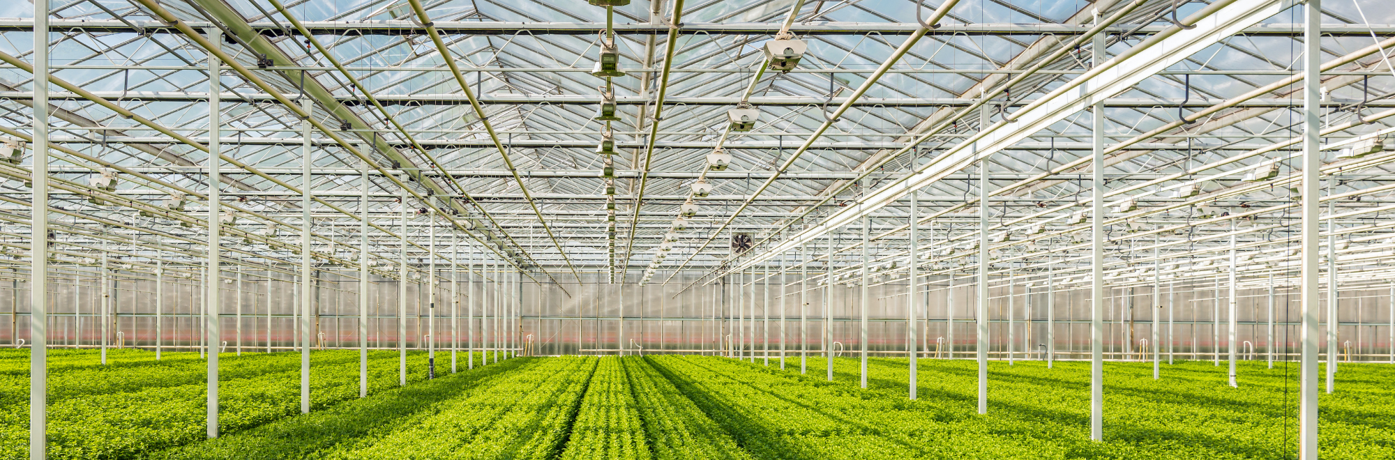 plants growing in a high-tech greenhouse