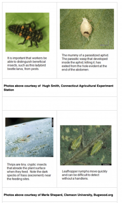 insects on nursery plants