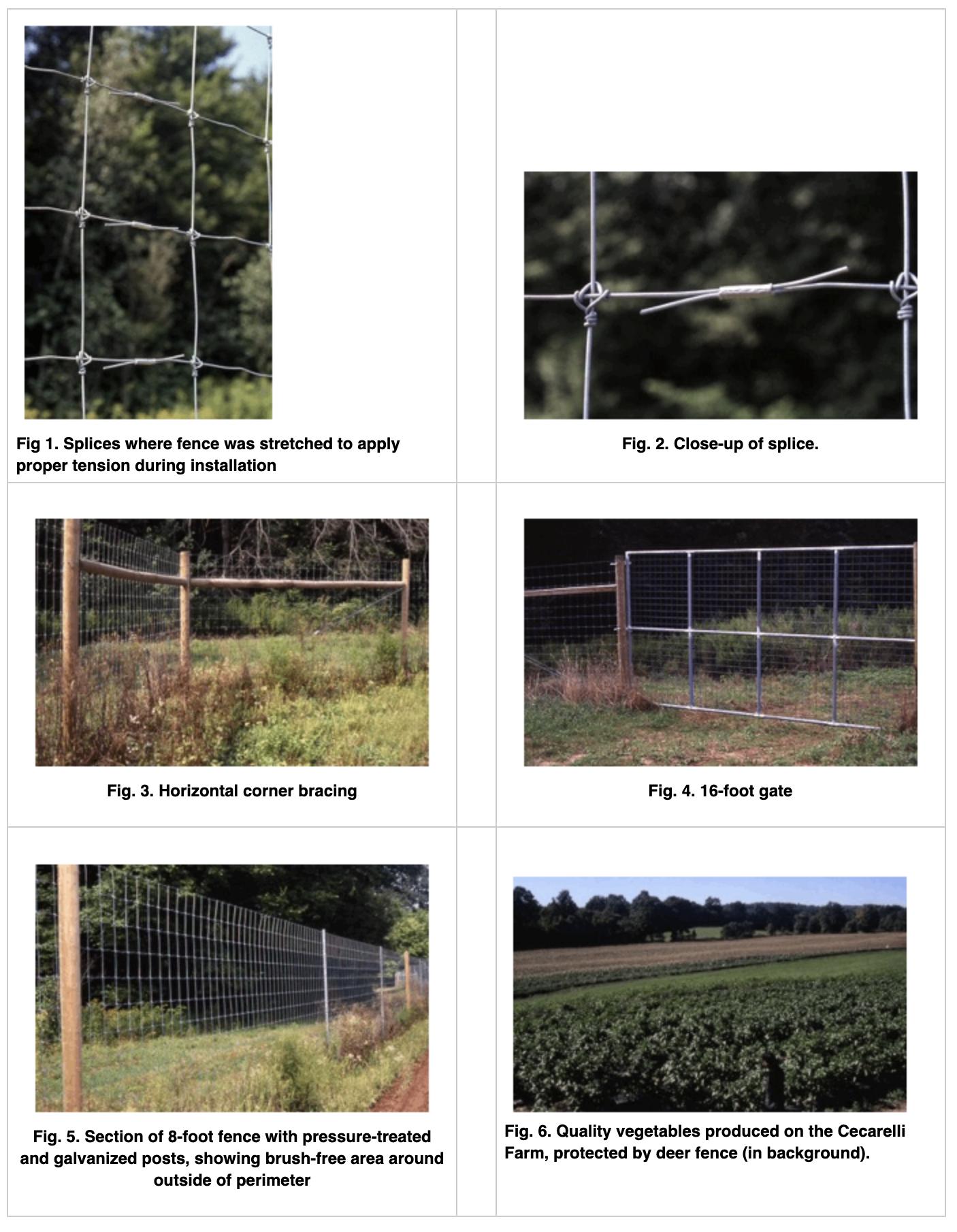 deer fence on vegetable farm