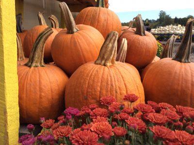 pumpkins at a farm stand