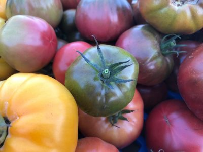 crate of multi-color tomatoes