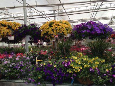 flowers hanging in garden center