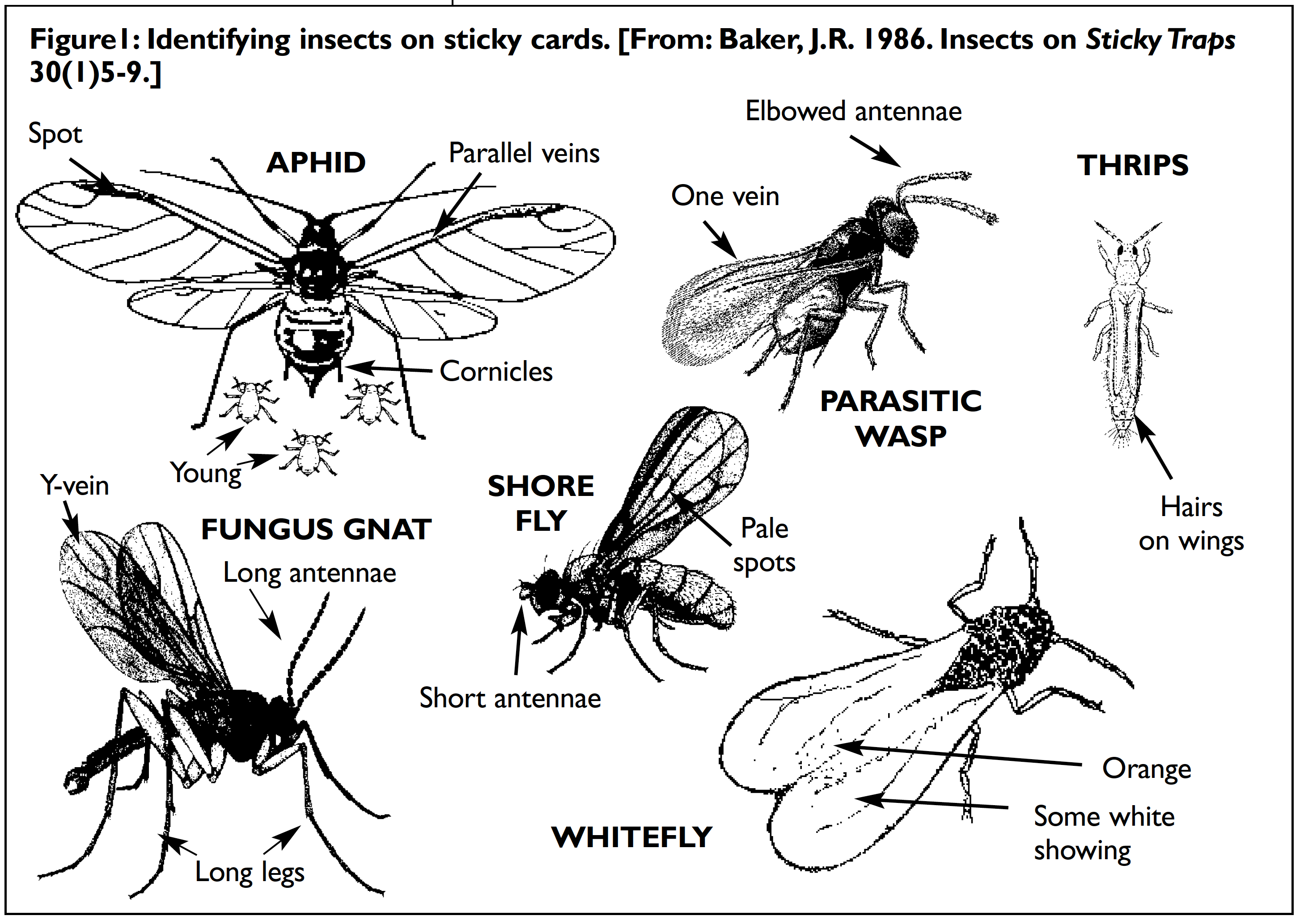 Figure 1: Identifying Insects on Sticky Cards