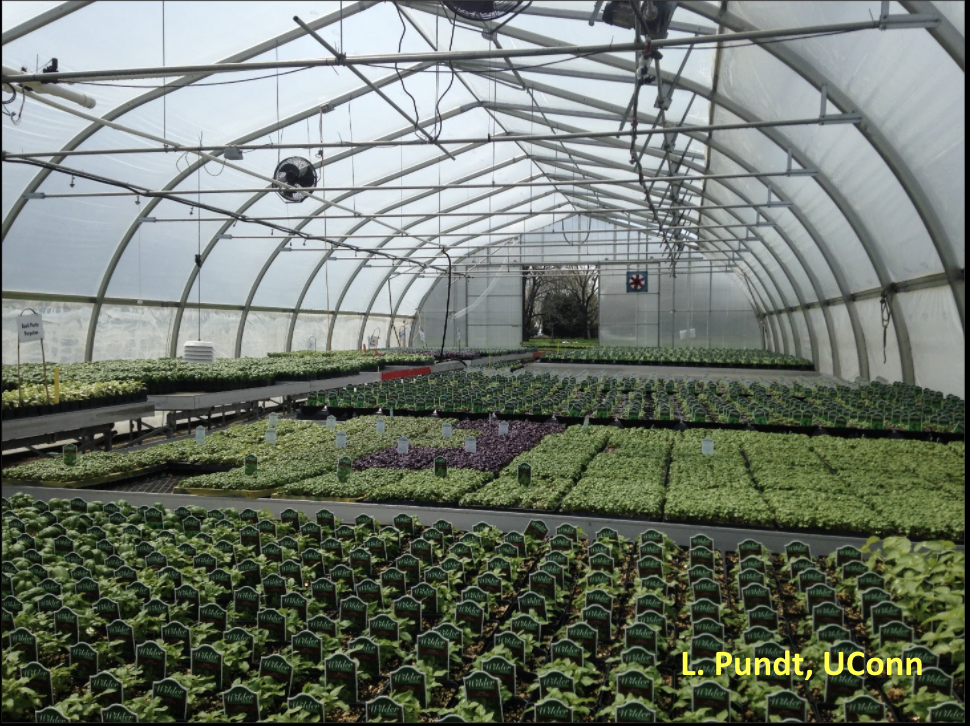 Large greenhouse with herbs growing