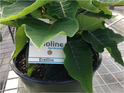 biological control on a greenhouse plant