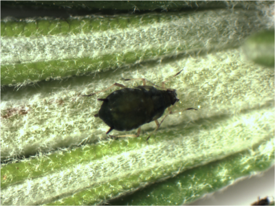 insect on plant in a greenhouse