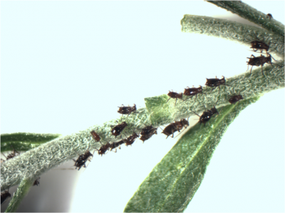 insects crawling on a greenhouse plant